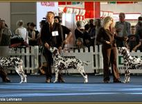Presentation of males Christi ORMOND `s VDH Centenary Winner Show in Dortmund 2011 - breeding group - Ring of Honor