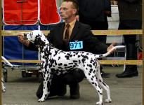 Presentation of female Christi ORMOND First Fairytale National Show in Oldenburg 2011 - Intermediate Class