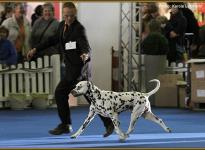 Presentation of male Christi ORMOND Exquisite Selection VDH Federal Winner Show in Dortmund 2011 - Ring of Honor