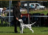 Presentation of female Obonya `s Pride Anna-Ariella Regional Show in Bielefeld 2011 - Puppy Class
