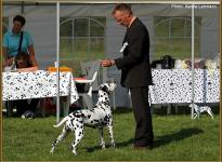 Presentation of female Nabuka vom Teutoburger Wald Regional Show in Leopoldstal 2011 - Champion Class