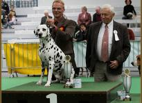 Presentation of male Spotnik `s First Farao For Ormond