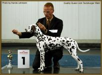 Presentation of female Quality Queen vom Teutoburger Wald