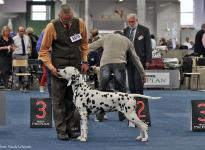 Presentation of the male Spotnik`s First Farao For Ormond