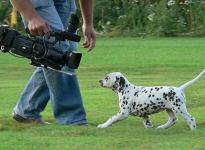 Impressions 8th week of life | The film crew visited our Christi ORMOND E - Litter