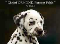 Christi ORMOND Forever Fable