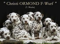 Christi ORMOND F - Litter 7th week of life