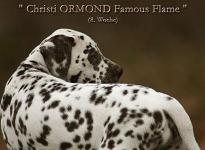 Christi ORMOND Famous Flame (called Pheebie) 8th week of life