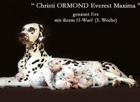 Christi ORMOND Everest Maxima with her Christi ORMOND H - Litter 3rd week of life
