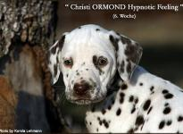 Christi ORMOND Hypnotic Feeling