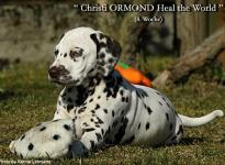 Christi ORMOND Heal the World