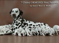 Christi ORMOND First Fairytale mit ihrem Christi ORMOND I - Wurf 3. Lebenswoche