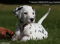 Christi ORMOND J - Litter 7th week of life
