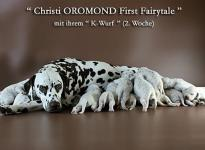 Christi ORMOND First Fairytale with her Christi ORMOND K - Litter 2nd week of life