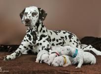 Christi ORMOND First Fairytale with her Christi ORMOND R - Litter 2nd week of life