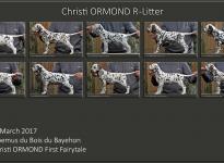 Stand Photos Christi ORMOND R - Litter