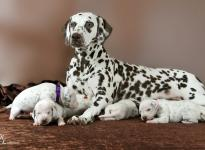 Christi ORMOND Immortal Soul with her Christi ORMOND S - Litter 2nd week of life
