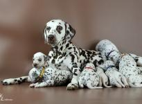 Christi ORMOND Immortal Soul with her Christi ORMOND S - Litter 3rd week of life