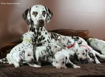 Christi ORMOND Immortal Soul with her Christi ORMOND M - Litter 3rd week of life