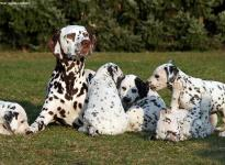 Christi ORMOND First Fairytale with her Christi ORMOND N - Litter 6th week of life