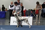 Europa Sieger Dog Show CACIB in Dortmund - Germany