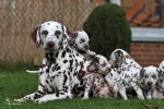 Photo Impressions of 5th week Christi ORMOND S - Litter