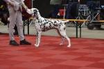 Martini Dog Show in Groningen - Niederlande