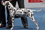 International Dog Show in Salzburg - Switzerland