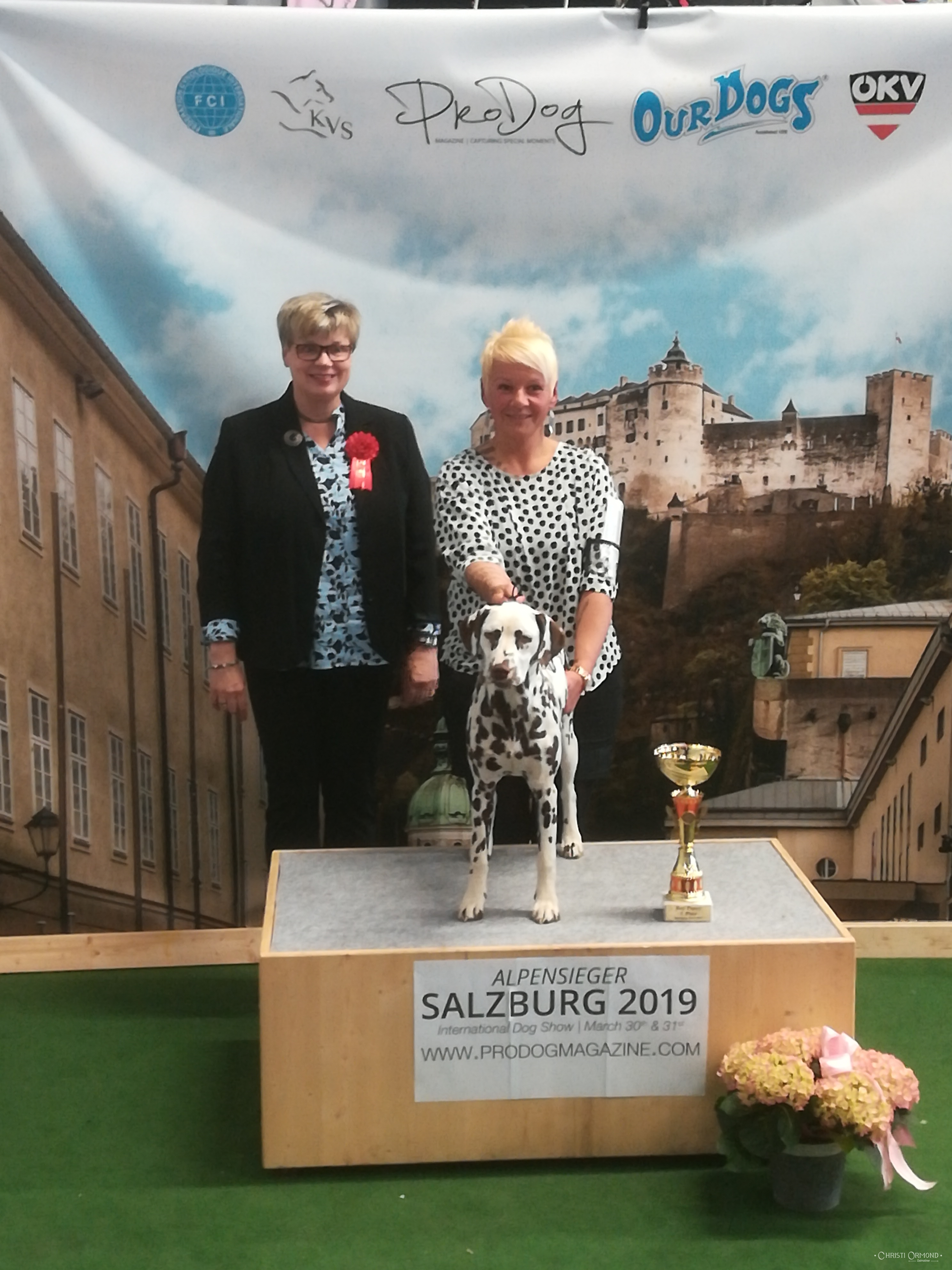 News | Christi ORMOND Dalmatians - FCI | VDH Breeding