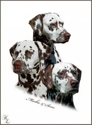 Mochaccino Dalmatian Dream mit ihren Söhnen  Christi ORMOND Exquisite Selection und Christi ORMOND Coppola