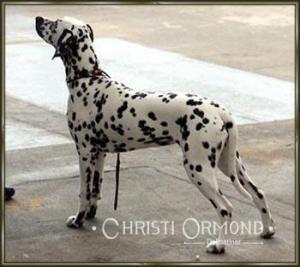 Christi ORMOND Exclusive Choise