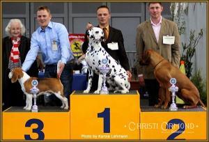 Premium Dog Handling Seminar: Präsentieren des Hundes, sitzend auf dem Podest im Ehrenring