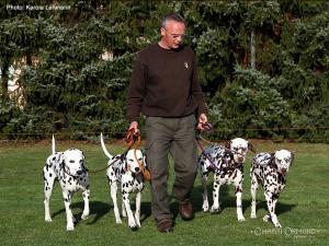 Dog Training Seminar: Wir laden Sie herzlich ein