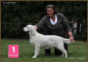 Dog Handling Seminar: Präsentieren des Hundes vor dem Platzierungsschild