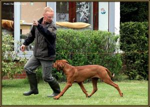 Dog Handling Seminar: Richtiges Laufen im Ausstellungsring