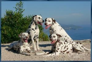 Anja, Porter, Mocha, and Calypso