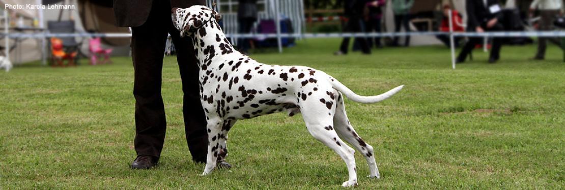Dog Handling Presentations 2011