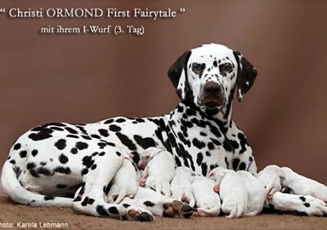 Christi ORMOND First Fairytale mit ihrem Christi ORMOND I - Wurf