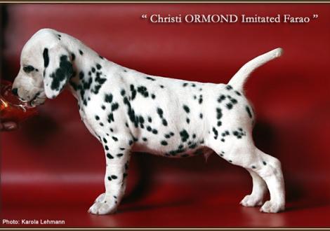 Christi ORMOND Imitated Farao