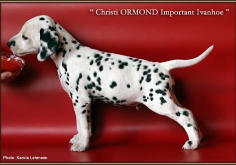 Christi ORMOND Important Ivanhoe