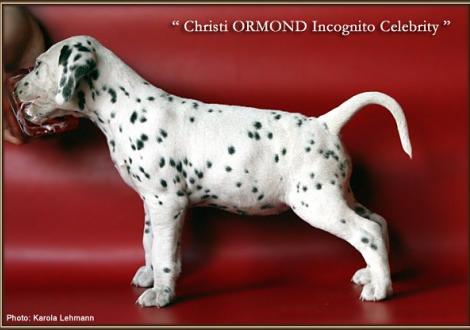 Christi ORMOND Incognito Celebrity