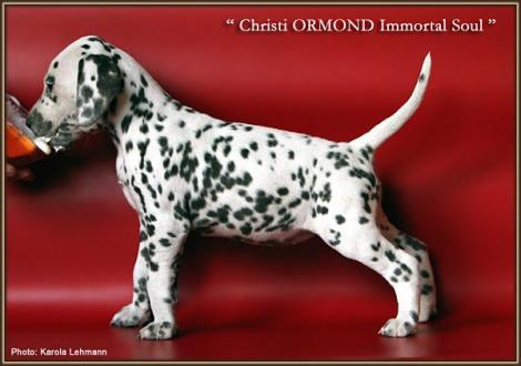 Christi ORMOND Immortal Soul