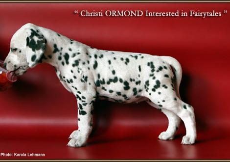Christi ORMOND Interested in Fairytales