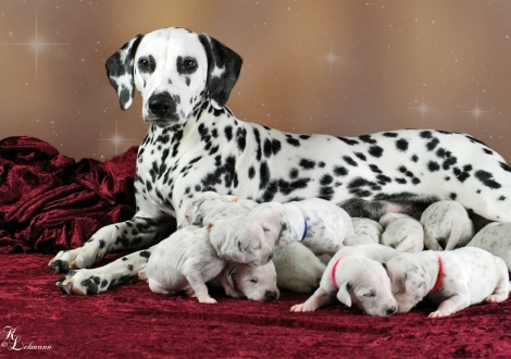 Christi ORMOND Now and Forever with her Christi ORMOND V - Litter 2nd week of life
