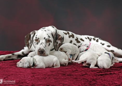 Christi ORMOND Mint Chocolate with her Christi ORMOND W - Litter 2nd week of life