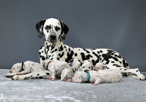 Christi ORMOND Queen of Adventure with her puppies 2nd week of life