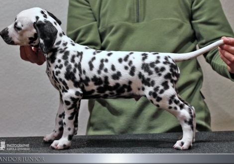 Male, (collar green), colour white - black, bilateral hearing | Looking for a loving home