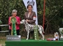 Vereinssiegerausstellung DZGD Wolfshagen