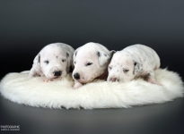 Photo Impressions of 2nd week Christi ORMOND Y - Litter