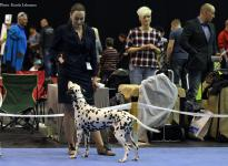 International Dog Show in Wels - Austria